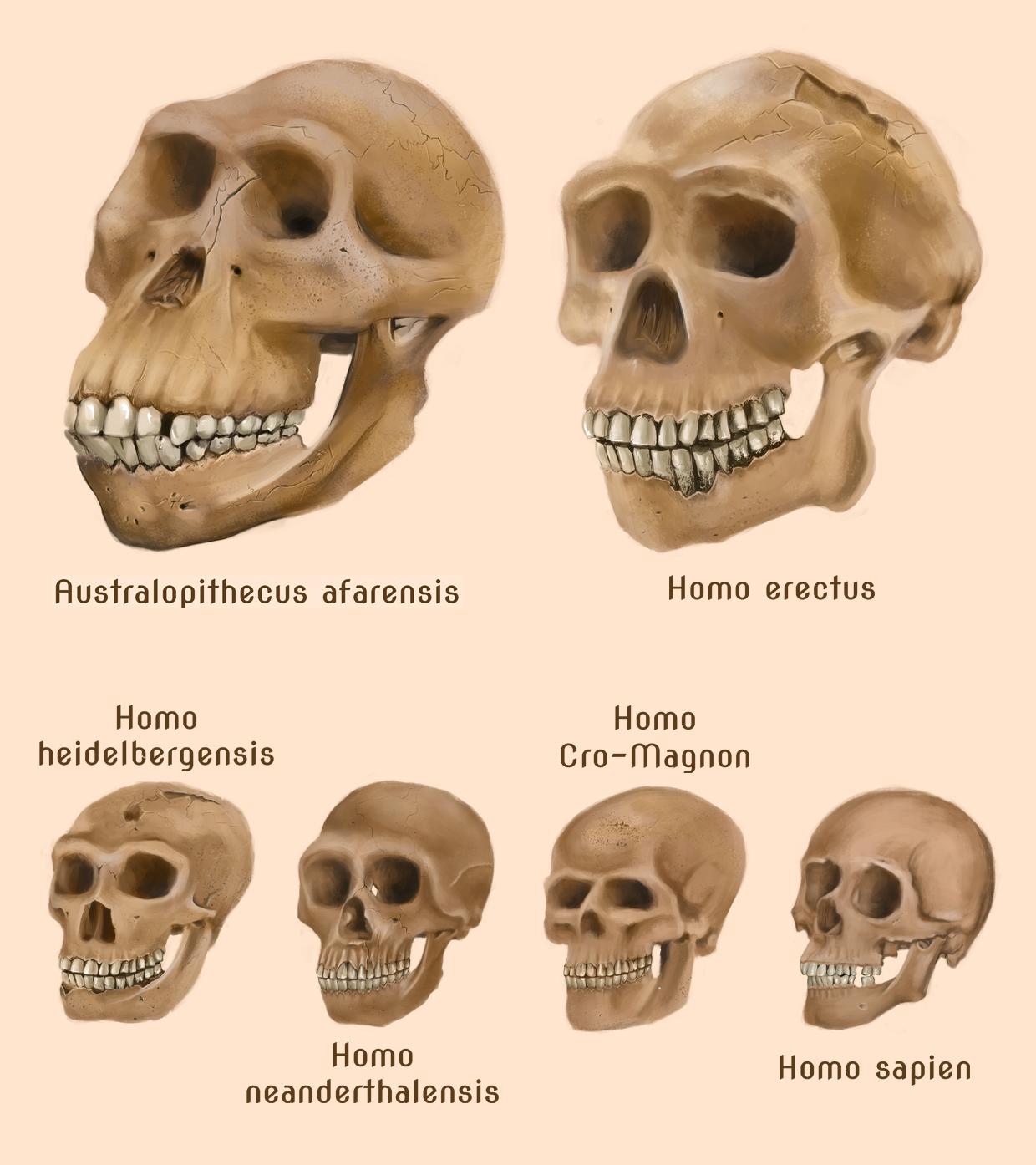 hodeskaller